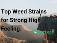 Top Weed Strains for Strong High Feeling